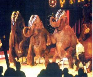Rompicapo di Elefanti formazione