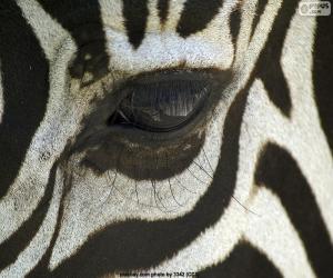 Rompicapo di Eye Zebra