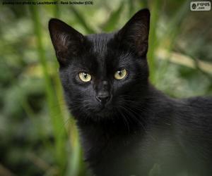 Rompicapo di Faccia da gatto nero