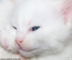 Rompicapo di Faccia di gatto bianco