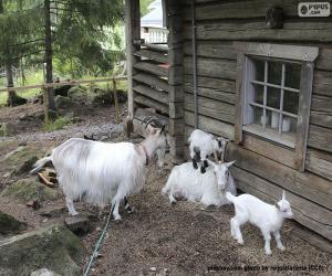 Rompicapo di Famiglia di capre