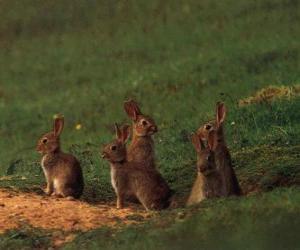 Rompicapo di Famiglia di conigli dalle loro tane