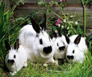 Rompicapo di Famiglia di conigli