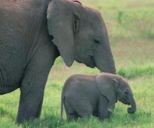 Rompicapo di Famiglia di elefanti