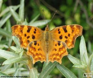 Rompicapo di Farfalla ali aperta