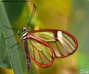 Rompicapo di Farfalla di vetro, Greta oto