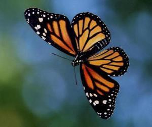 Rompicapo di Farfalla in volo