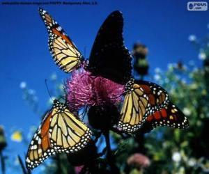 Rompicapo di Farfalla monarca