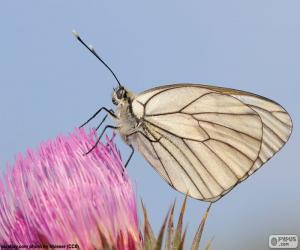 Rompicapo di Farfalla sul fiore rosa