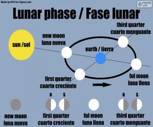 Rompicapo di Fasi lunari