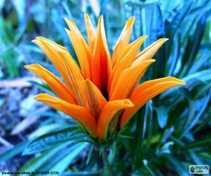 Rompicapo di Fiore arancio esotico