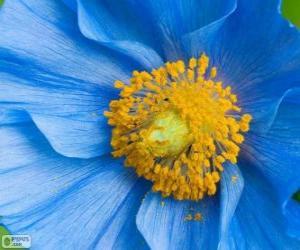 Rompicapo di Fiore blu