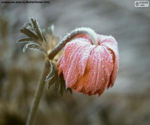 Rompicapo di Fiore congelato