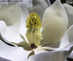 Rompicapo di Fiore di Magnolia