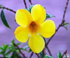Rompicapo di Fiore giallo di cinque petali