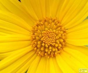 Rompicapo di Fiore giallo