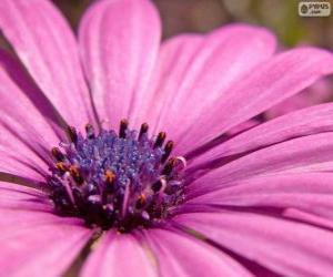 Rompicapo di Fiore rosa
