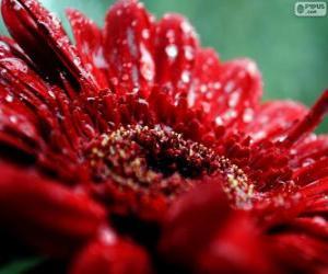 Rompicapo di Fiore rosso