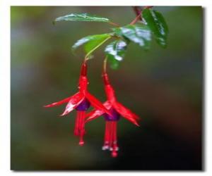 Rompicapo di Fiore tropicale
