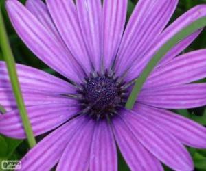 Rompicapo di Fiore viola
