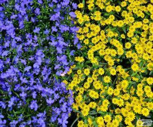 Rompicapo di Fiori blu e gialli