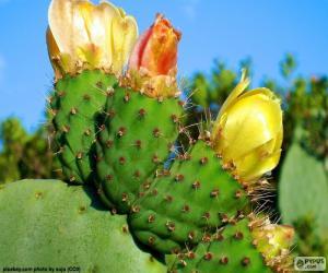 Rompicapo di Fiori del cactus giallo