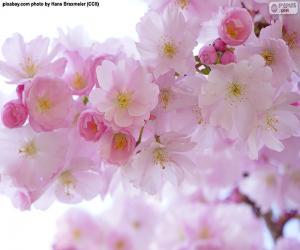 Rompicapo di Fiori di ciliegio