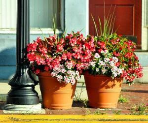 Rompicapo di Fiori in un vaso o fioriera