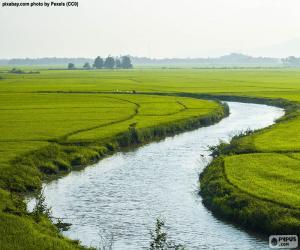 Rompicapo di Fiume tra campi di riso