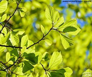 Rompicapo di Fogli dell'albero