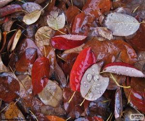Rompicapo di Foglie di autunno bagnato