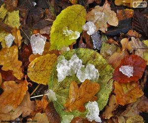 Rompicapo di Foglie e ghiaccio