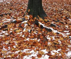 Rompicapo di Foglie e neve