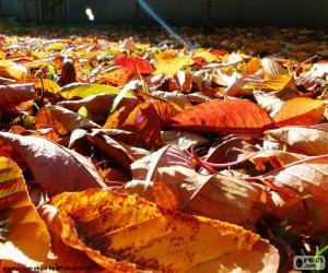 Rompicapo di Foglie secche in autunno