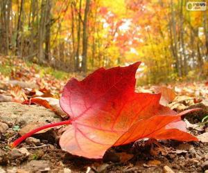 Rompicapo di Foglio di autunno