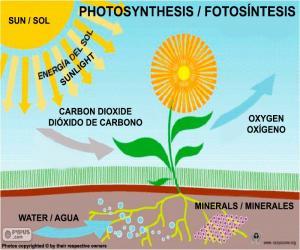 Rompicapo di Fotosintesi