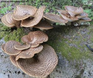 Rompicapo di Funghi su un tronco