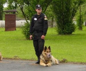 Rompicapo di Funzionario di polizia con il suo cane della polizia