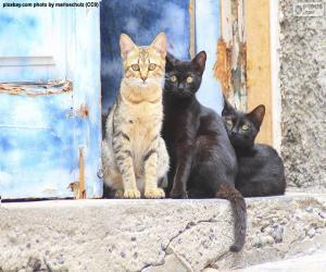 Rompicapo di Gatti alla porta