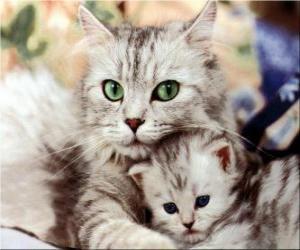 Rompicapo di Gatti