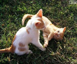 Rompicapo di Gattini che giocano