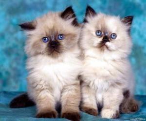 Rompicapo di Gattini che guardare avanti