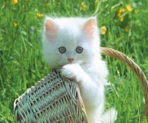 Rompicapo di Gattino bianco carino