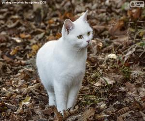 Rompicapo di Gattino bianco