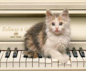Rompicapo di Gattino che gioca su un piano