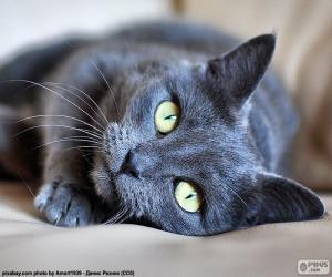 Rompicapo di Gattino che riposa
