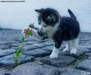 Rompicapo di Gattino e pianta