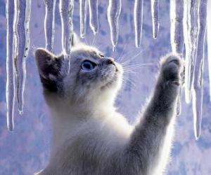 Rompicapo di Gattino gioca con ghiaccio