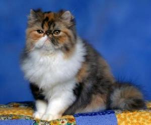 Rompicapo di Gattino persiano