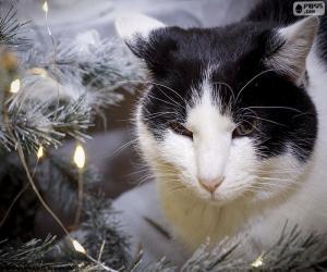 Rompicapo di Gatto a Natale